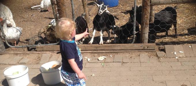 Scott's Nursery Animals