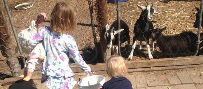 Scott's Nursery Vredenburg