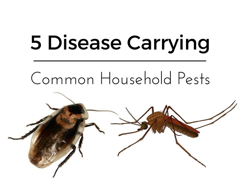 5 disease carrying common household pests