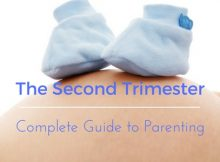 The Second Trimester of Pregnancy