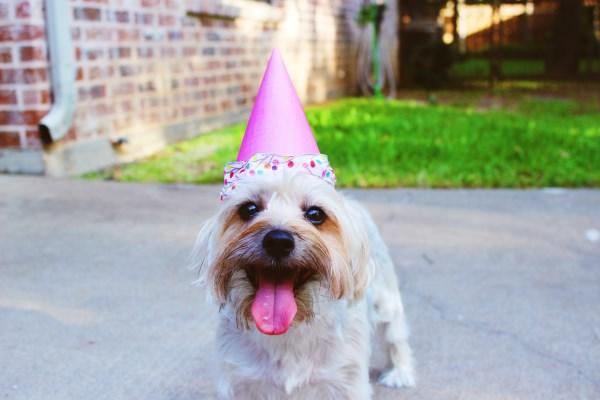 Dog Birthday Guest