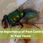 The Importance of Pest Control in your Home