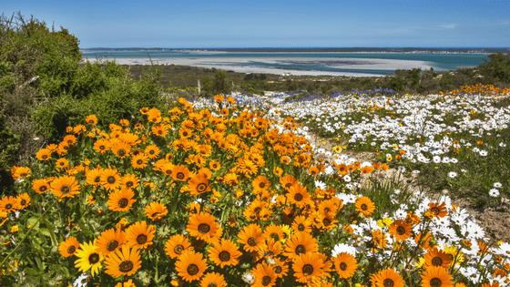 West Coast Way flower season