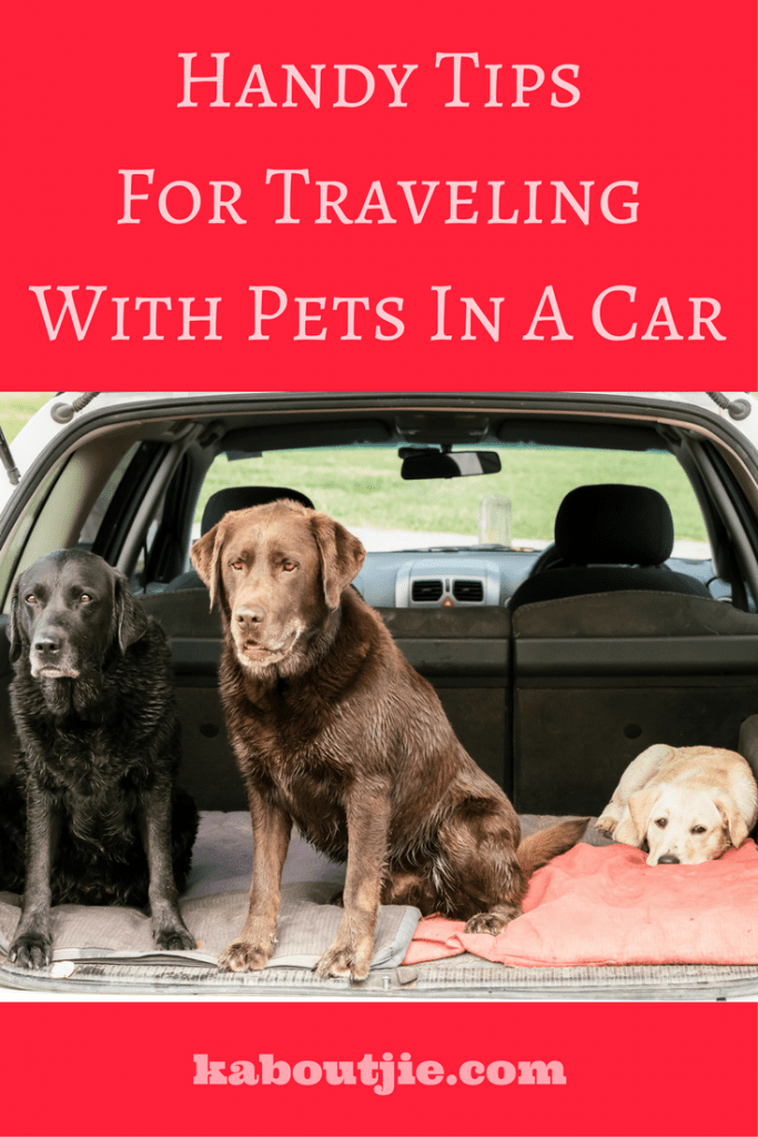 Handy Tips For Traveling With Pets In A Car