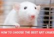 How to choose the best rat cages