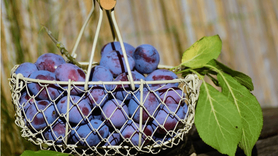 Eat fresh fruit every day