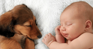Tips to introduce your dog to your baby