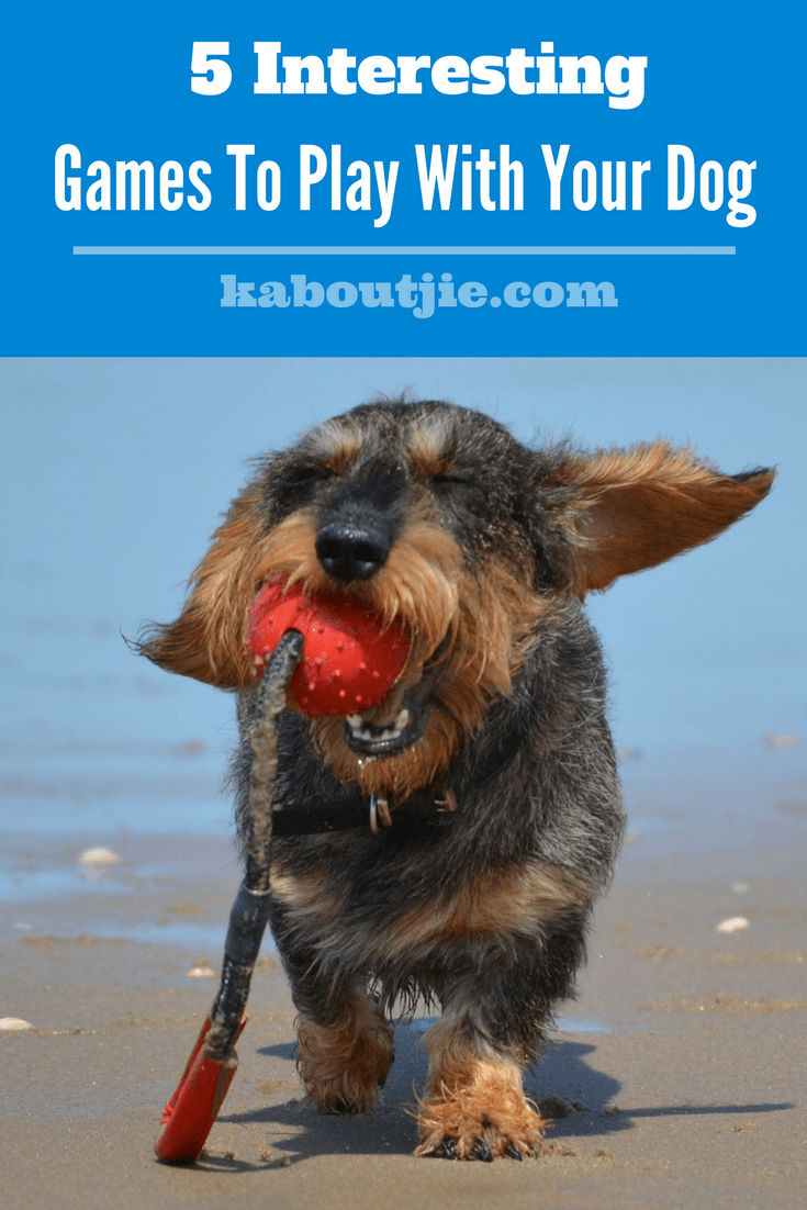 5 Interesting Games To Play With Your Dog