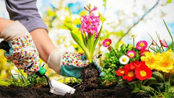 Planting Beautiful Flowers