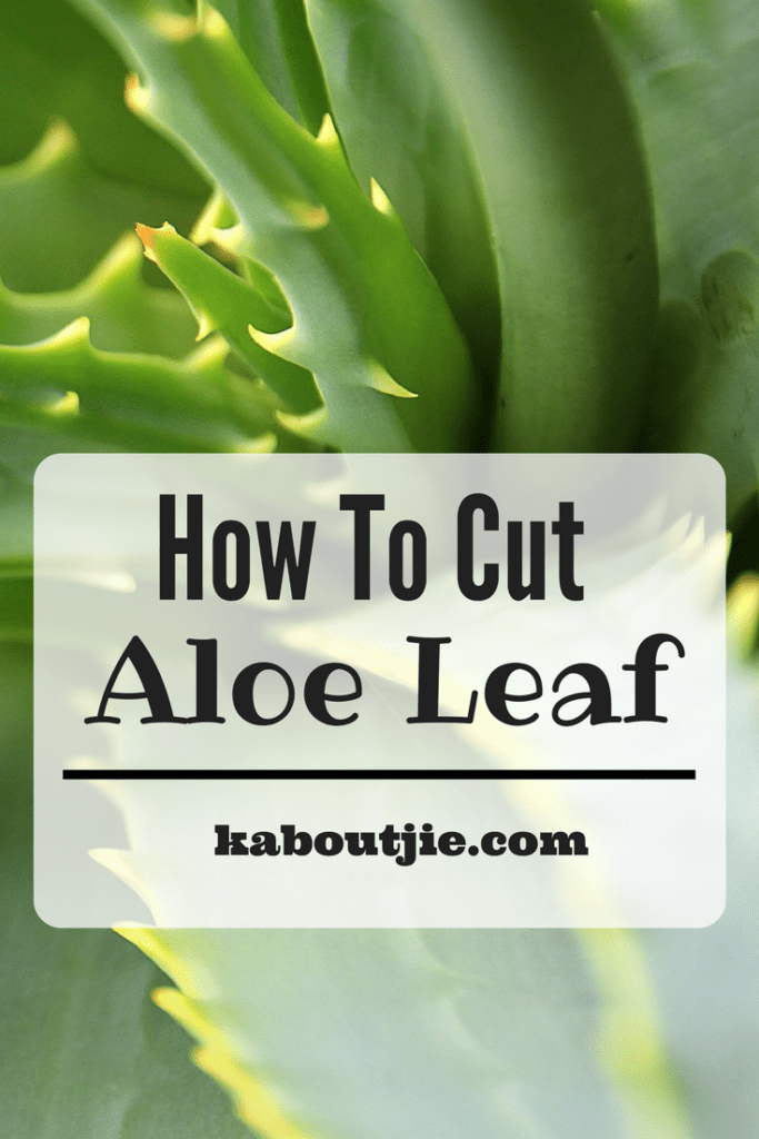 How To Cut Aloe