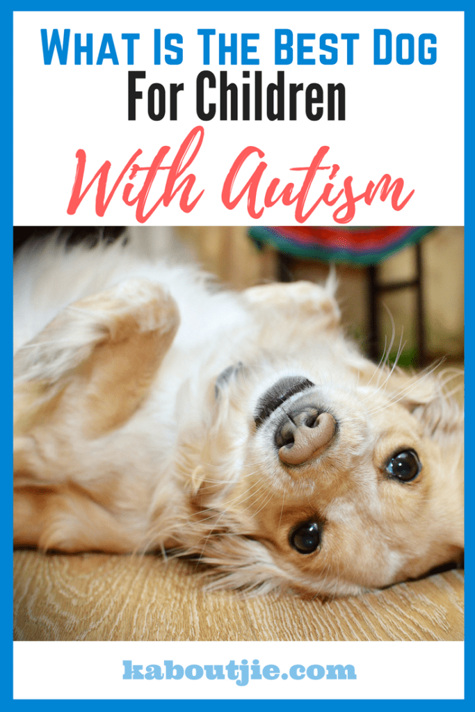 What Is The Best Dog For Children With Autism
