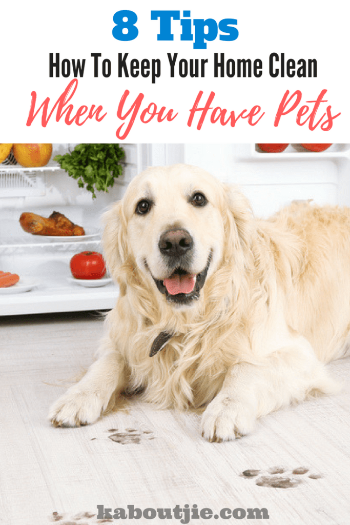 8 Tips - How To Keep Your Home Clean When You Have Pets