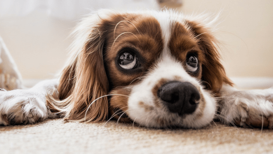 5 Factors to Consider Before Getting Your Kids a Dog
