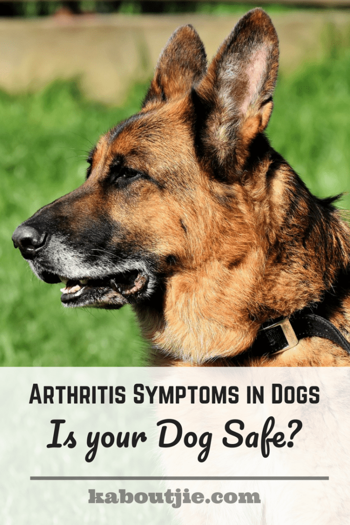 Arthritis Symptoms in Dogs - Is Your Dog Safe?