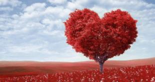 Heart tree blossoms