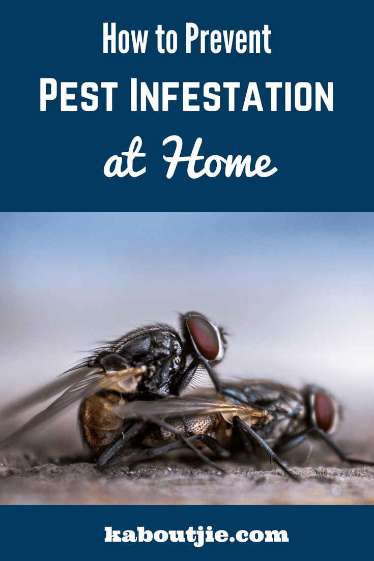 How To Prevent Pest Infestation At Home