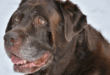 Arthritis Symptoms in Dogs – Is your Dog Safe?
