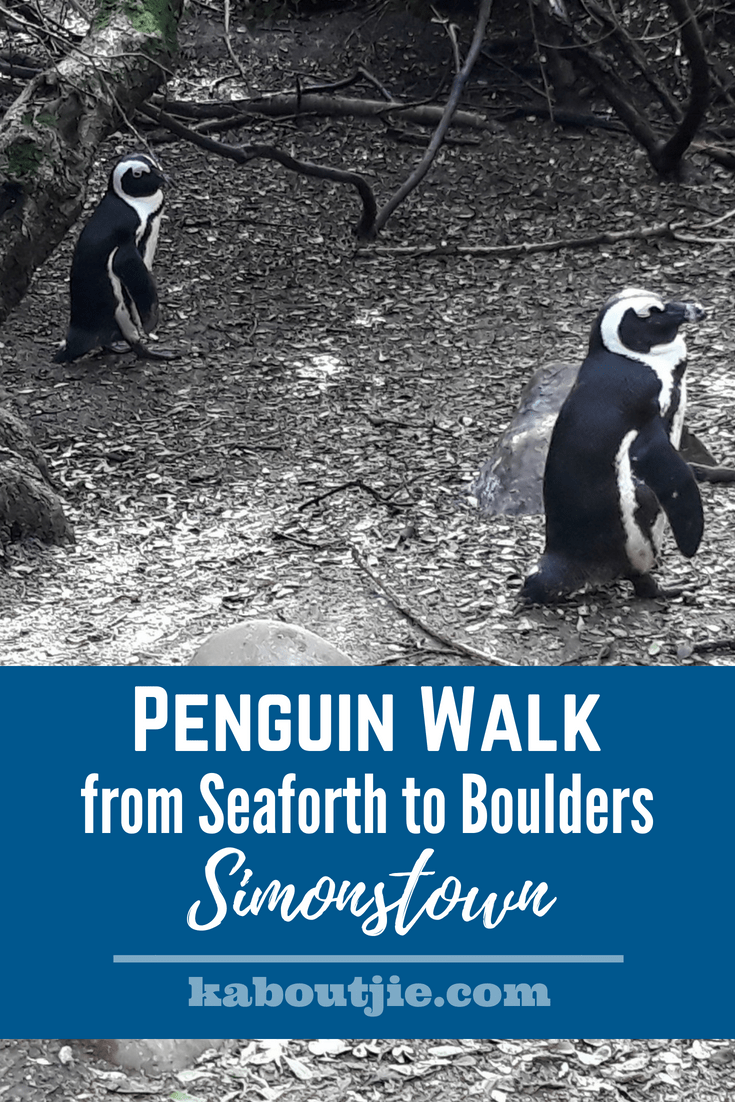 Penguin Walk from Seaforth to Boulders - Simonstown
