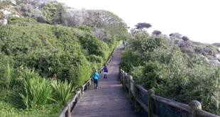 Penguin walk Simonstown