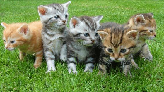 kittens grass