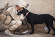 Man in military uniform with dog