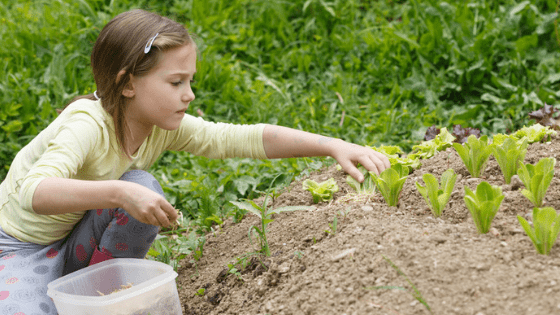 Little girl planting