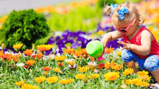 Toddler with pigtails watering flowers