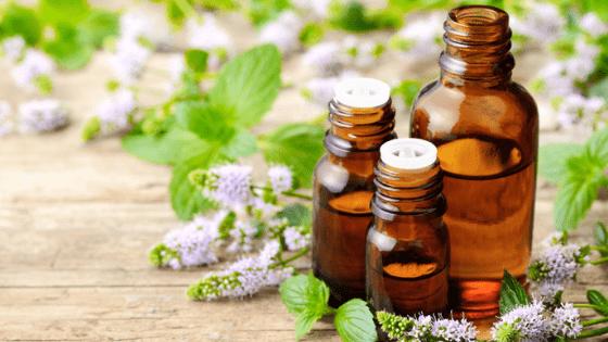 Essential oils leaves plants