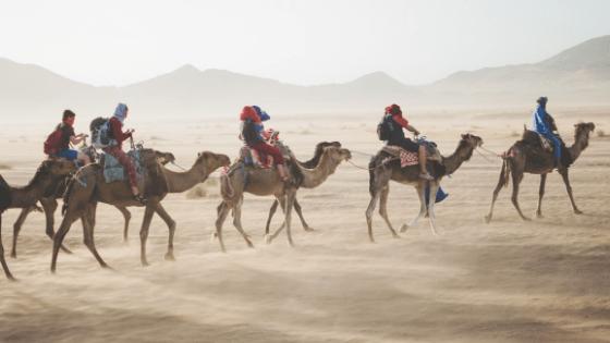 Marratech camel ride
