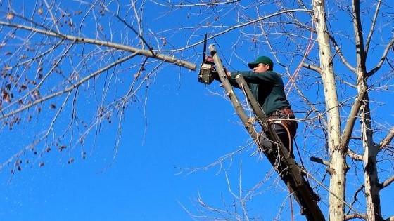 tree cutting man