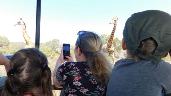 Giraffes Thali Thali Game Lodge