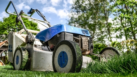 maintain lawn