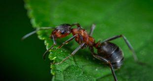 Exterminator Control