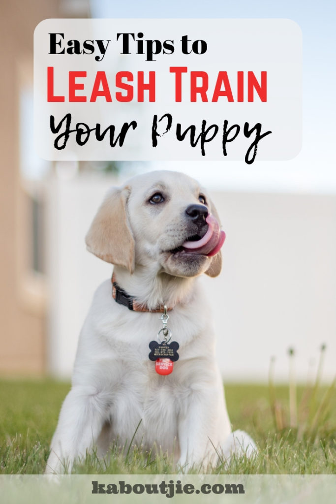 Easy Tips To leash Train Your Puppy