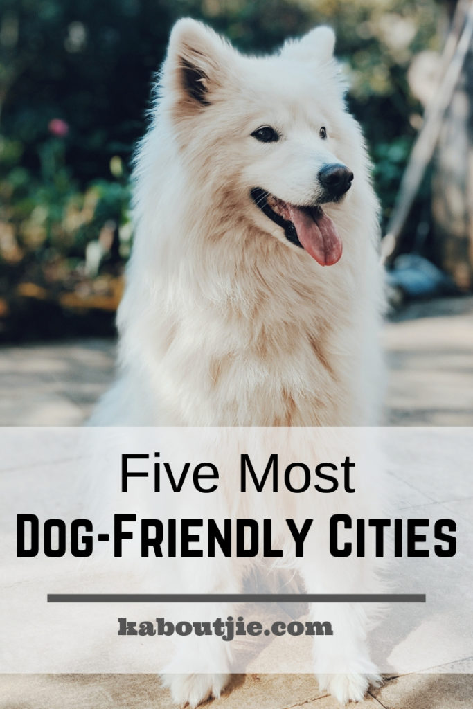 Five Most Dog Friendly Cities