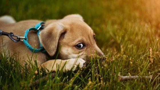 Puppy wearing leash