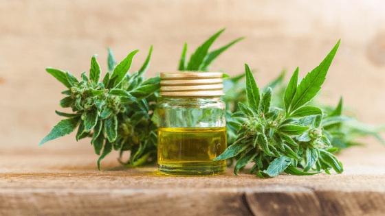 CBD oil cannabis leaves