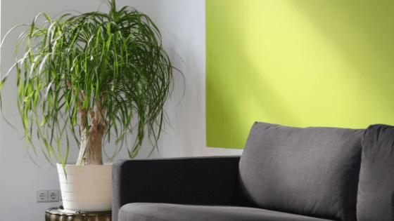 couch potplant
