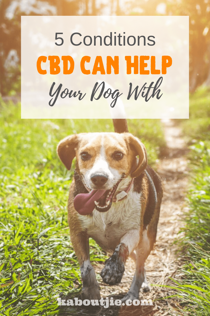 5 Conditions CBD Can Help Your Dog With