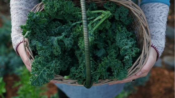Basket of parsley