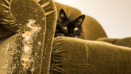 Cat scratched furniture