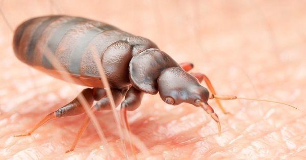 Bed Bug Biting
