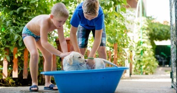 Boys washing dog