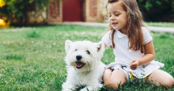 Child patting dog